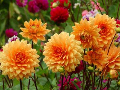 Gėlių pardavėjos turguje (1)