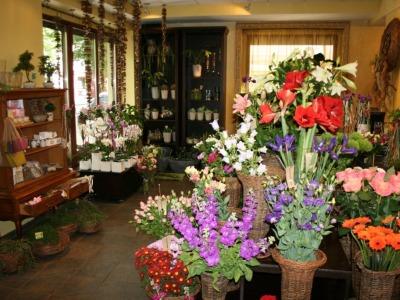 Gėlių salonas Fitodizaino studija ieško floristo (1)