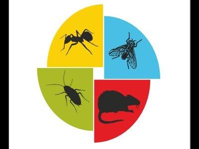 Vadybininkas-dezinfekuotojas (1)